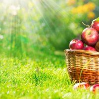 Elmada Bulunan Vitaminler